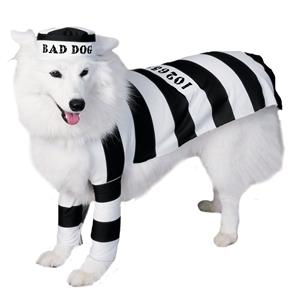 bad boy dog in costume