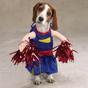 dog in cheerleader costume