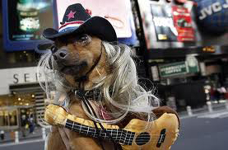 dog dressed as a musician