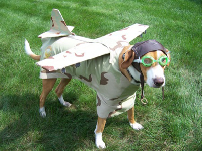 dog dressed in plane costume for Halloween